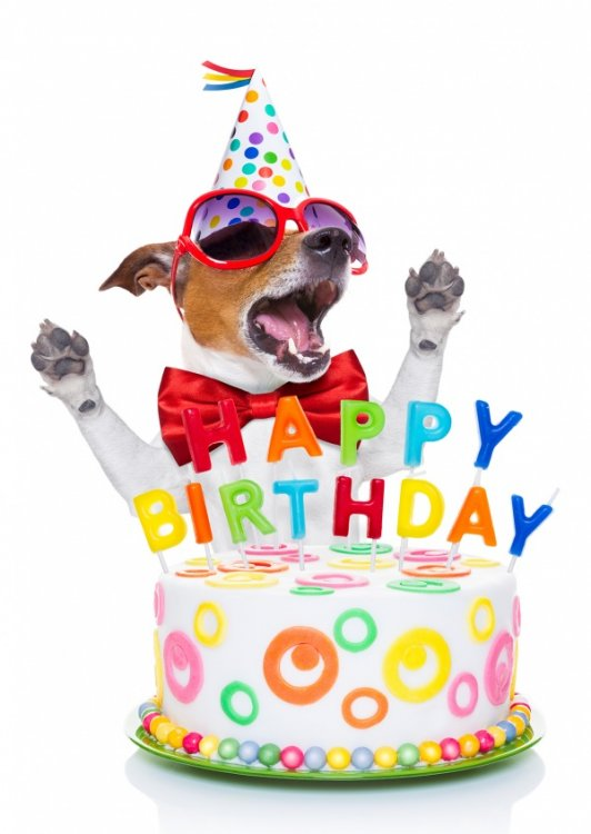 dog-cake-happy-birthday-postcard-greeting-card-send-online-2637_57.thumb.jpg.04f29784964a478786275666bfb67a94.jpg
